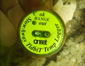 An eMOLT temperature tag. NEFSC photo.